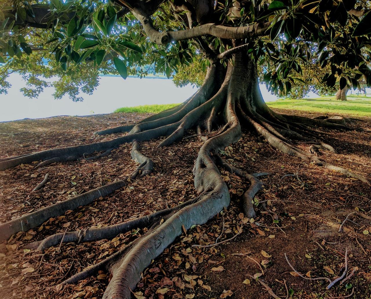 green leaf tree beside body of water