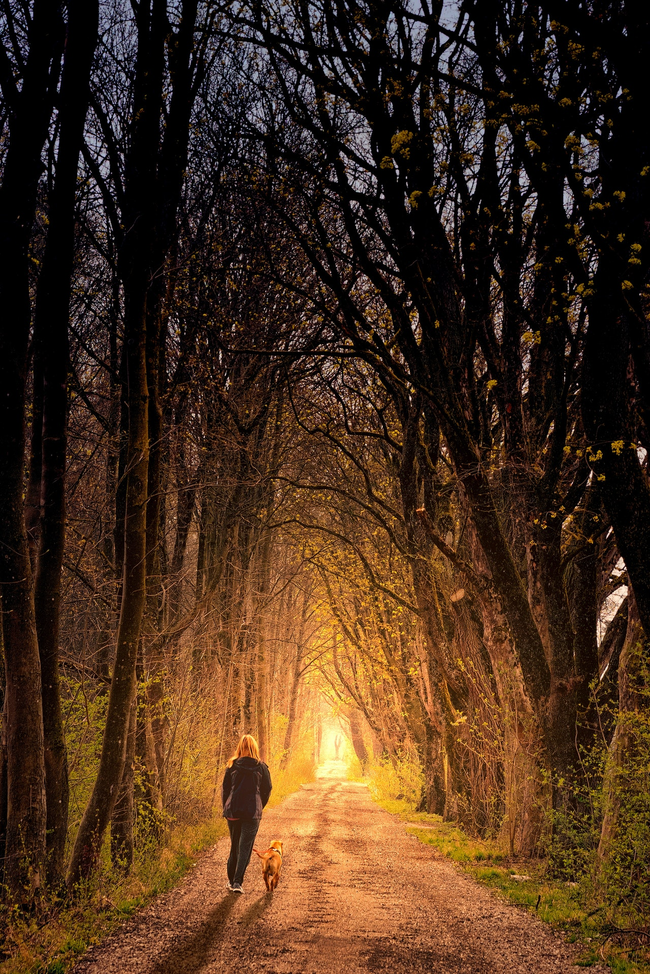 Photo of Person Walking On Dirt Road